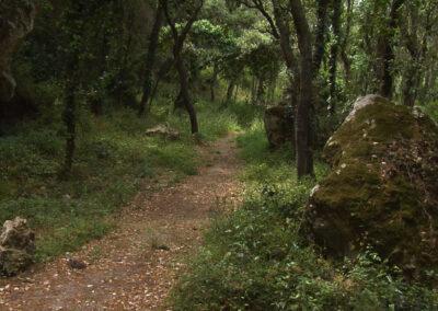 El bosc de Marmellar
